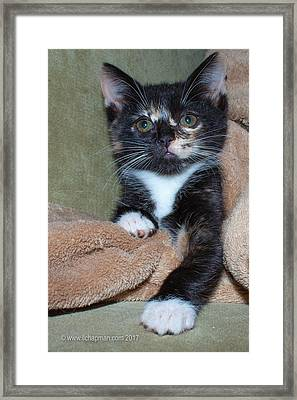 Framed Print featuring the photograph Pick Me by Lora Lee Chapman