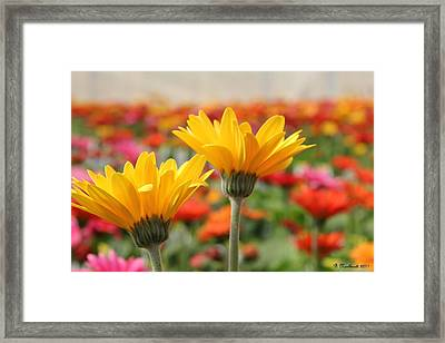 Pick Me... No Pick Me Framed Print by Betty Northcutt