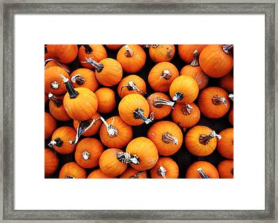 Pick One Framed Print by JAMART Photography