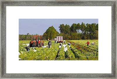 Pickers Framed Print by David Lee Thompson