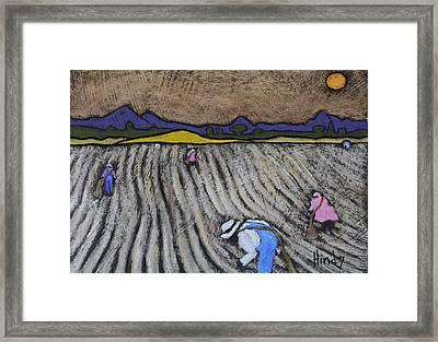 Pickin Cotton Framed Print