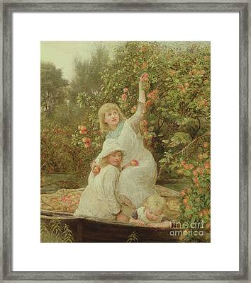 Picking Apples Framed Print by Frederick Morgan