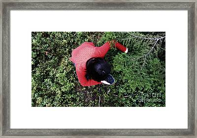 Picking Berries In The Woods Framed Print