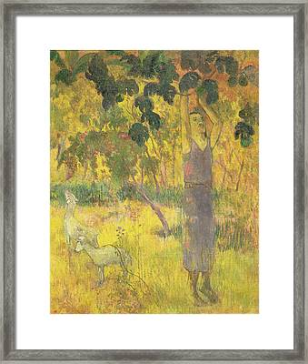 Picking Fruit From A Tree Framed Print by Paul Gauguin