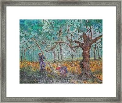 Picking Olives Framed Print by Lore Rossi