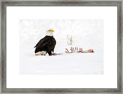 Picking The Bones Framed Print