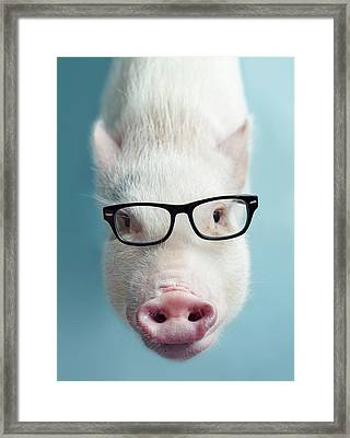 Pickle The Pig I Framed Print by Eli Warren