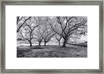 Picnic Bench Dream Framed Print by Sean Davey