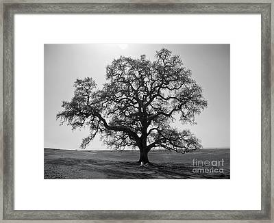 Picnic On Table Mountain Framed Print
