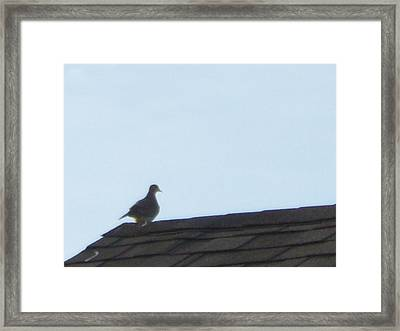 Picture Of A Pigeon Framed Print