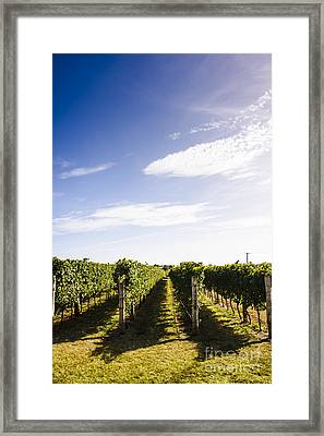 Picturesque Tasmania Vineyard Framed Print