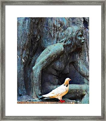 Pidgeon Framed Print by Carlos Kogl