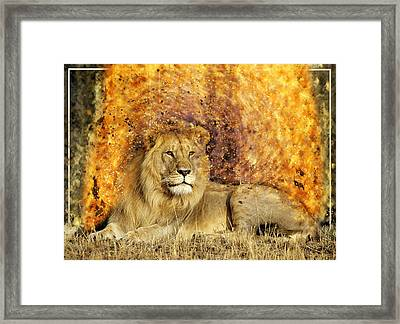 Pieces Of A Lion Framed Print