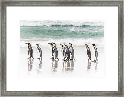 Pied Piper. Framed Print