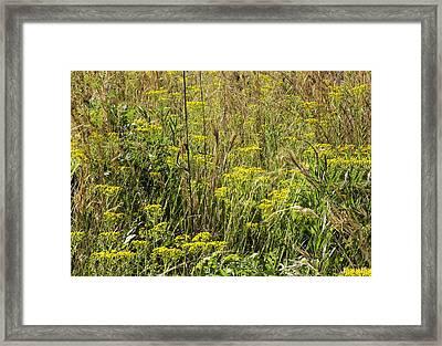 Piedmont Prairie Detail Framed Print