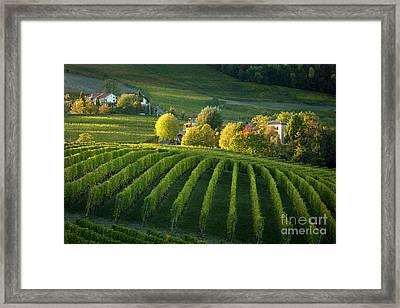 Piemont Vineyard Iv Framed Print by Brian Jannsen