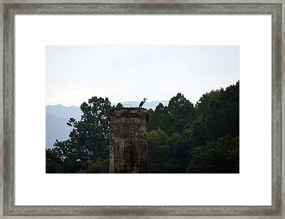 Pier-perched Blue Heron Framed Print by Timothy Connard