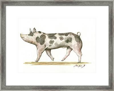 Pietrain Pig Framed Print by Juan Bosco