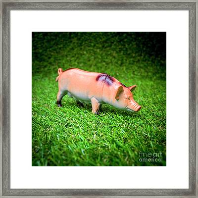 Pig Figurine Framed Print by Bernard Jaubert