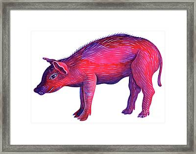 Pig Framed Print