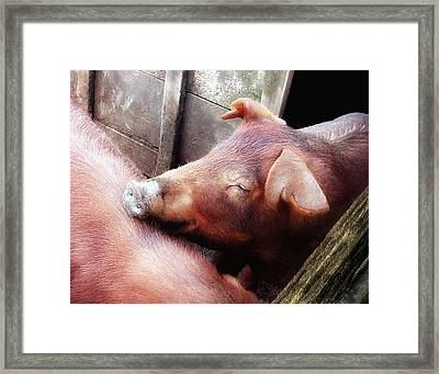 Pig Pals Framed Print by Ross Powell