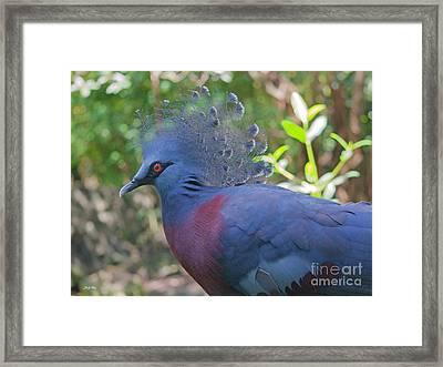 Pigeon Elegante Framed Print by Judy Kay