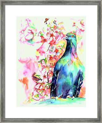Pigeon Eye Framed Print by Christy  Freeman