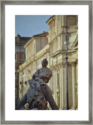 Pigeon Parking Framed Print by JAMART Photography