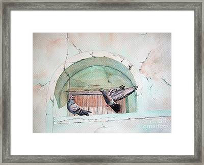 Pigeon Perch Framed Print