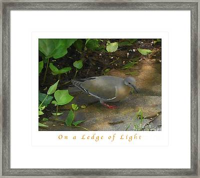 Framed Print featuring the photograph Pigeon Poster by Felipe Adan Lerma