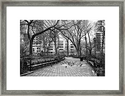 Pigeons In Union Square Park Framed Print by John Rizzuto