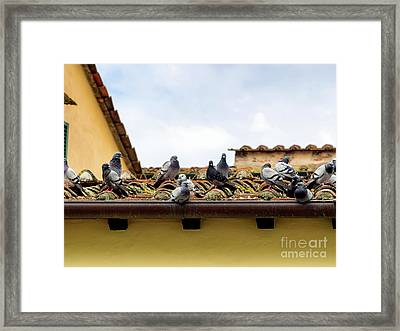 Pigeons On An Old Roof In Lucca Framed Print