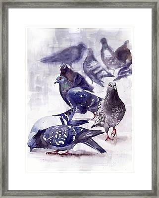 Pigeons Watercolor Framed Print