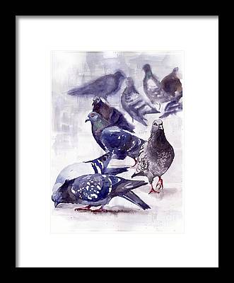 Pigeon Framed Prints