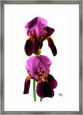 Piggy Back Irises Framed Print