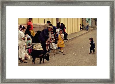 Piggy Went To Market Framed Print