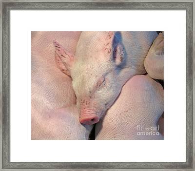 Piglets Asleep Framed Print by Ann Horn