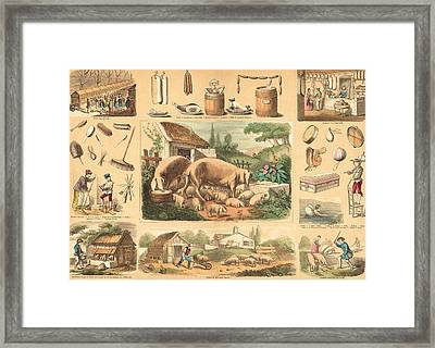 Pigs Framed Print by French School