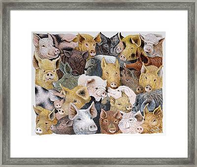 Pigs Galore Framed Print by Pat Scott