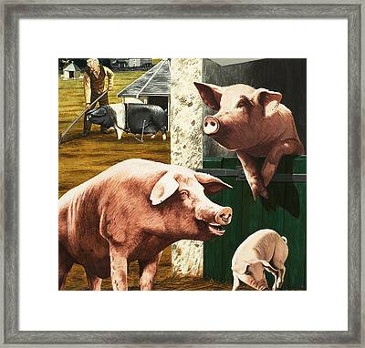 Pigs Framed Print by Janet Blakeley