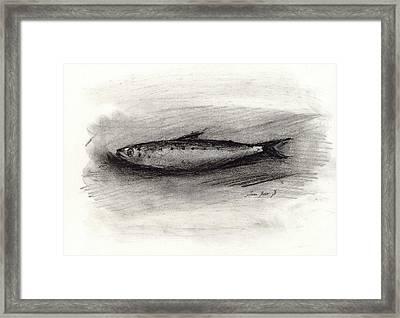 Pilchard Drawing Framed Print