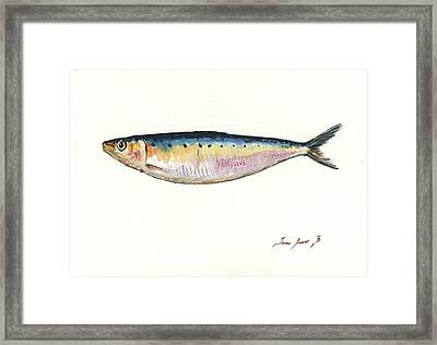 Pilchard Watercolor Framed Print