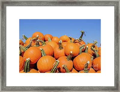 Pile Of Pumpkins Framed Print