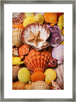Pile Of Seashells Framed Print by Garry Gay