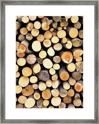 Pile Of Wood Framed Print