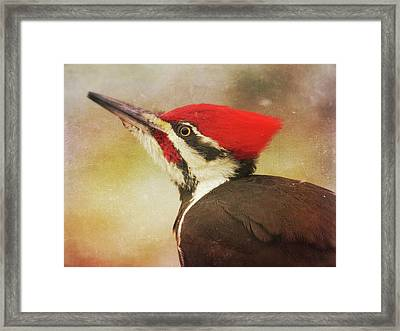 Pileated Woodpecker With Snowfall Framed Print by Heidi Hermes