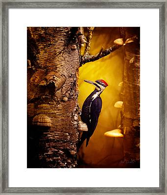 Pileated Woodpecker Forest Sunrise Framed Print by Bob Orsillo