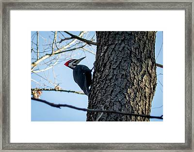 Framed Print featuring the photograph Pileated Woodpecker  by Ricky L Jones