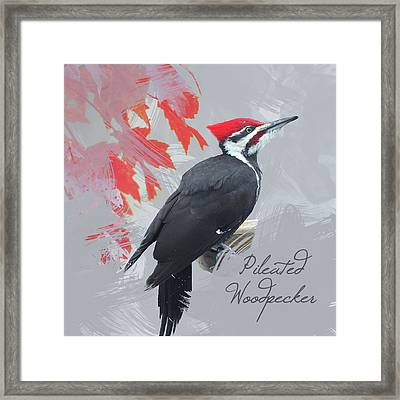 Pileated Woodpecker Watercolor Photo Framed Print by Heidi Hermes