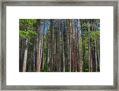 Pillars Of Nature Framed Print by James BO Insogna
